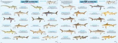 Species: Shark Identification Chart Species Identification | Species ... Shark Species Chart